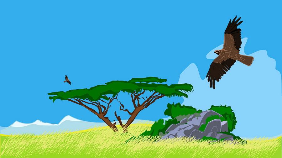 Kisah Dongeng Burung Elang Yang Malang