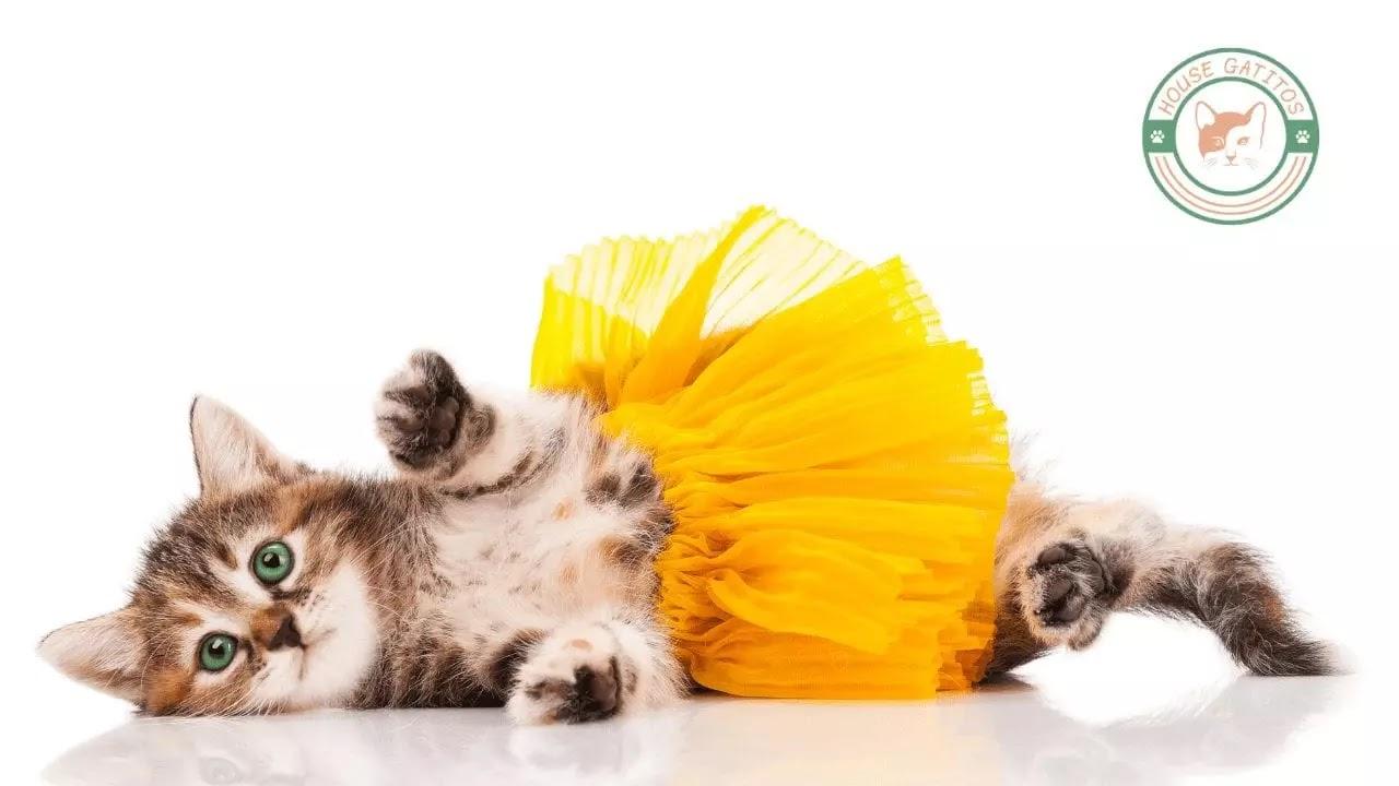 gatito bebé con un tutú amarillo