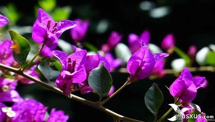 11 Jenis Tanaman Hias Bunga Lengkap Gambar dan Penjelasannya