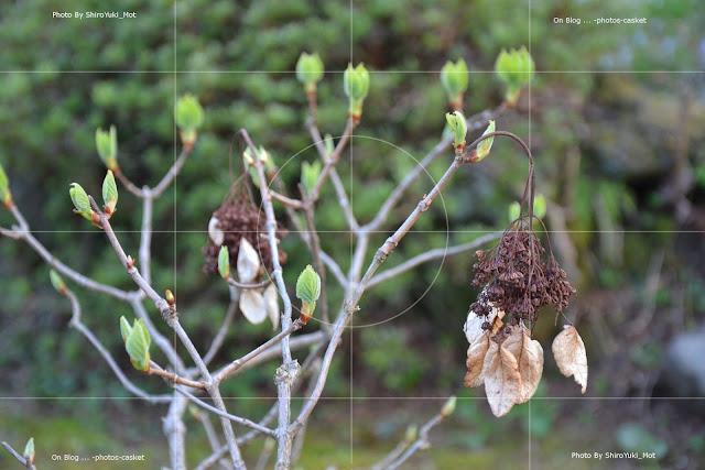 草木 紫陽花 Reincarnation Of A Lovebird Charles Mingus