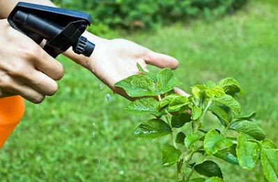 membuat cairan pestisida