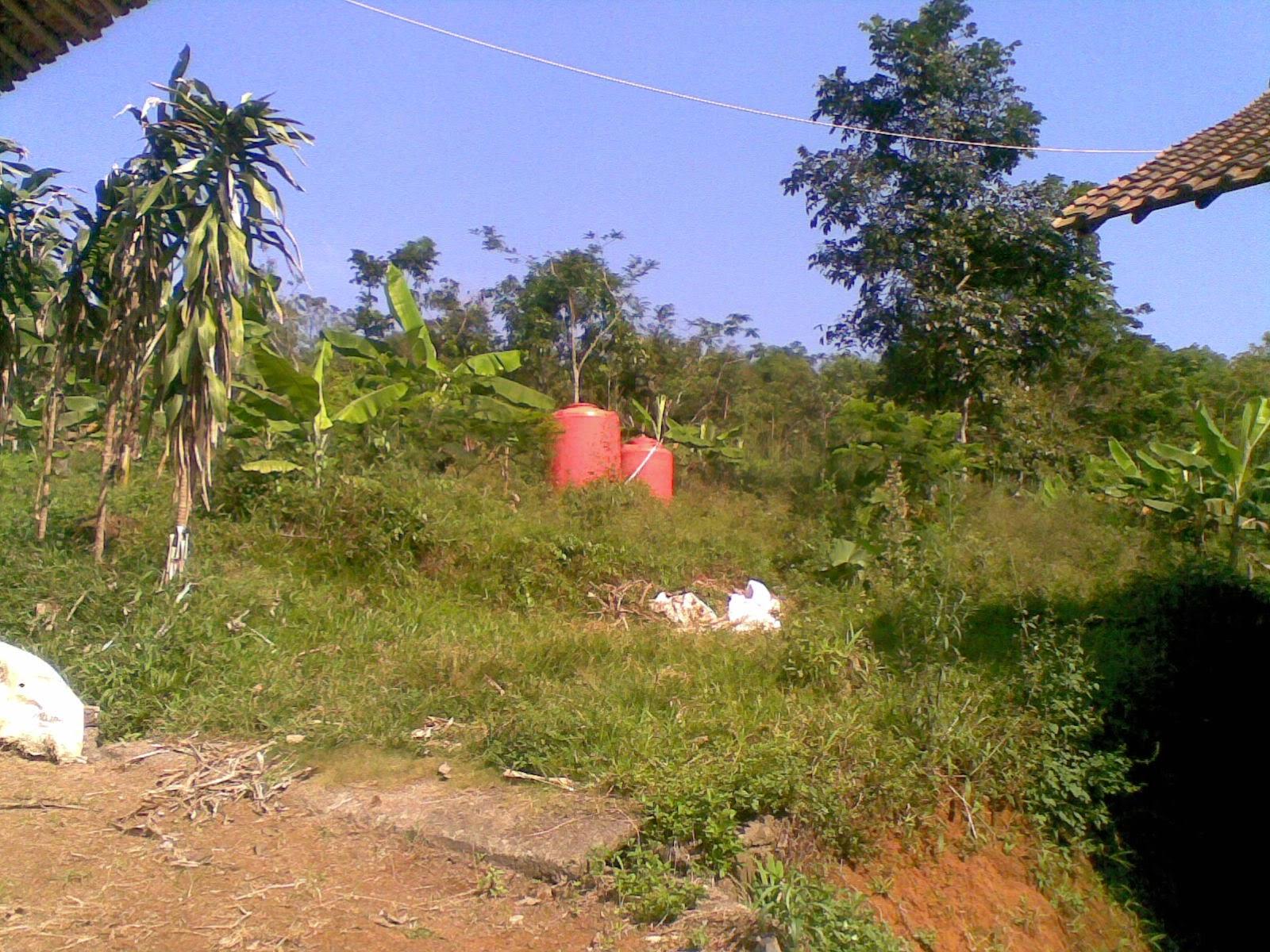09082014(004) Jual tanah luas 5 Ha, kebun karet yang sudah panen jual tanah di sukaresmi