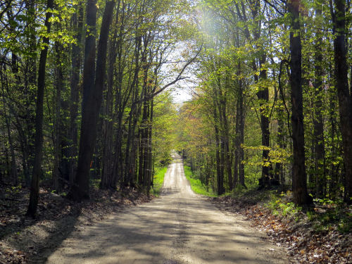 dirt road with spring trees