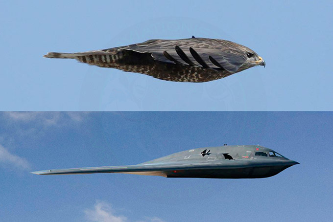 Avión similar a Falcón