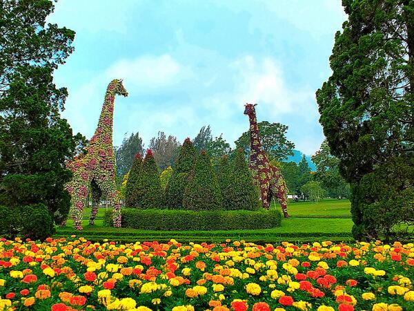 lokasi dan rute taman bunga nusantara cianjur jawa barat rh berkeliling com