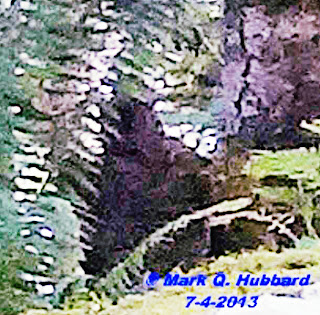 enhancement of bigfoot photo