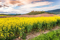 Spring fields - Photo by Alexander Schimmeck on Unsplash