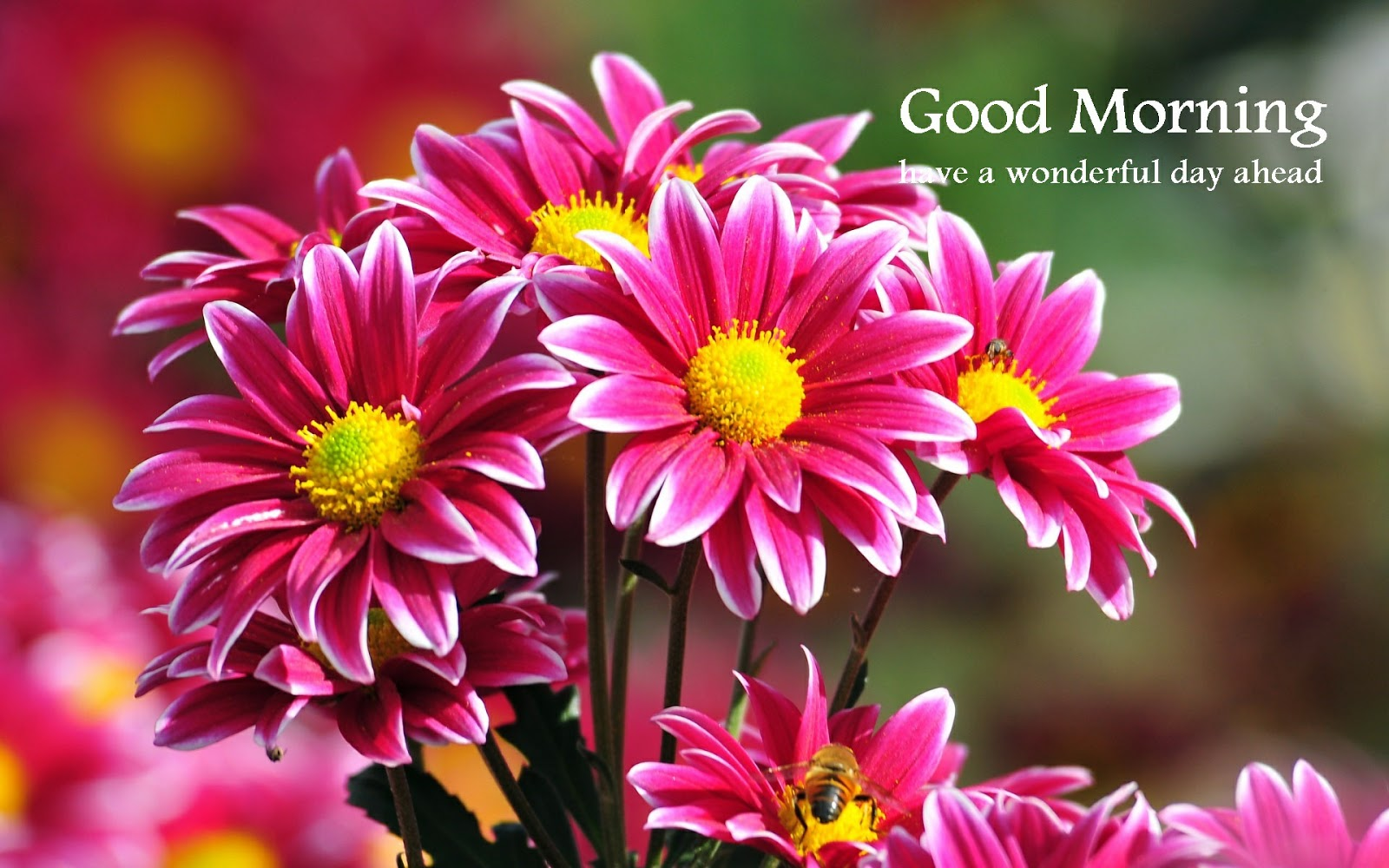 Images For Whatsapp Good Morning Wise With Beautiful Flower