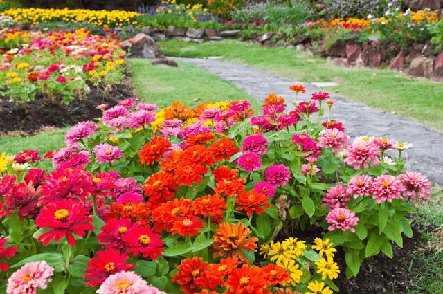 Garden Color Palette: How to Pick a Garden Color Palette
