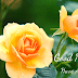 Good morning images with flowers & Good morning flower images free Download For Your social media account.