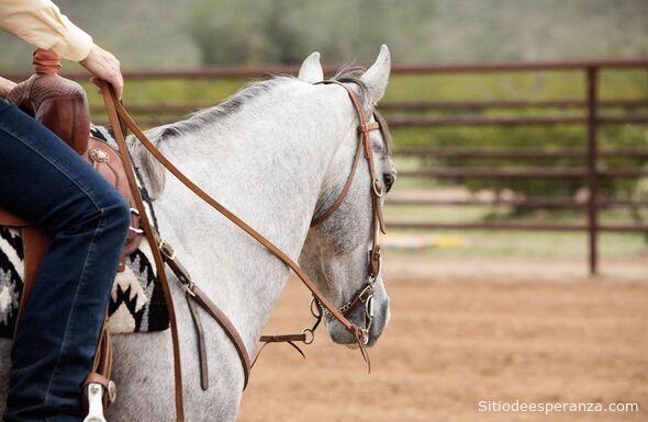 Riendas de un caballo
