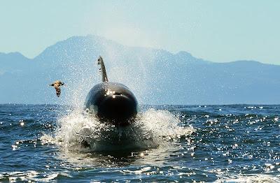 """Cena de """"Orcas Assassinas"""" - Divulgação"""