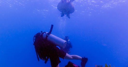 Exploring a whole new world through scuba diving.