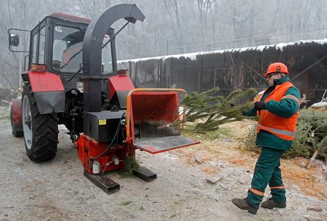 Від початку січня кияни здали на утилізацію в пункти прийому понад 11 тис. ялинок