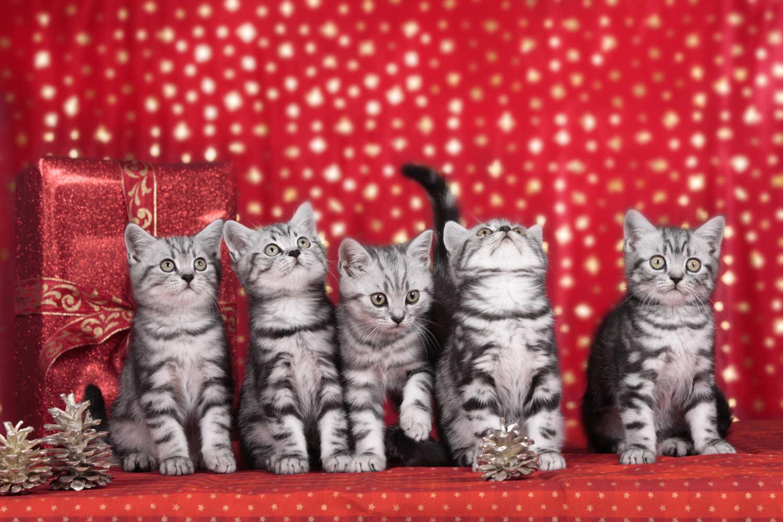 Gambar Kucing Yang godean.web.id