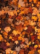 fall-foliage-111315__180.jpg