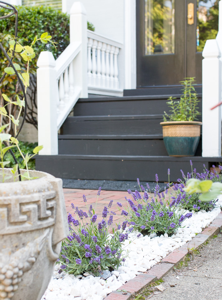Landscaping with Herbs: A Lavender Lined Walk | 17 Apart