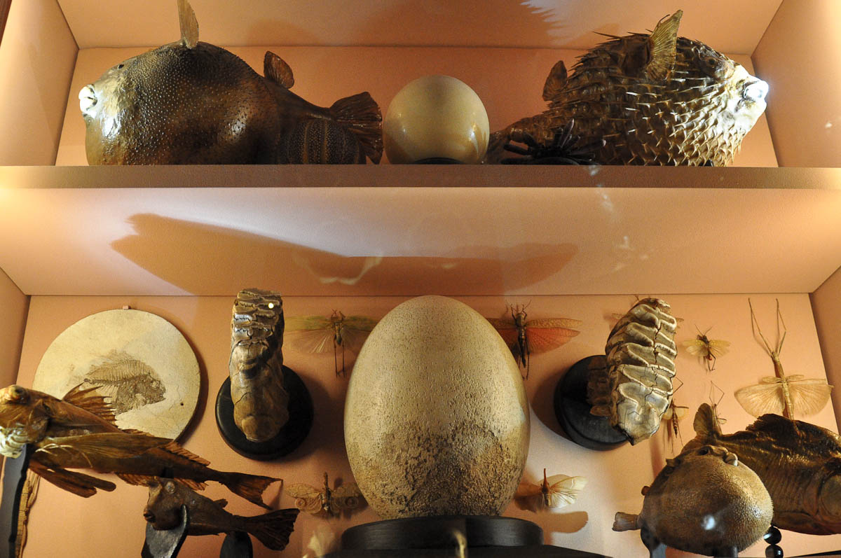 Display with eggs, animal teeth and fish, Natural History Museum, Venice, Italy