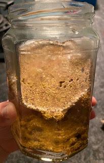 Etapes pour faire germer les graines de la box Pousse pousse