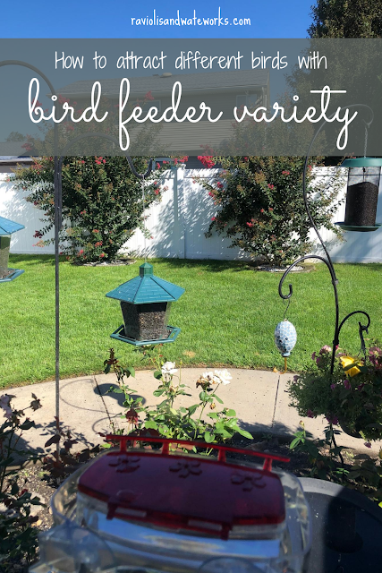 how to attract birds to a bird feeder