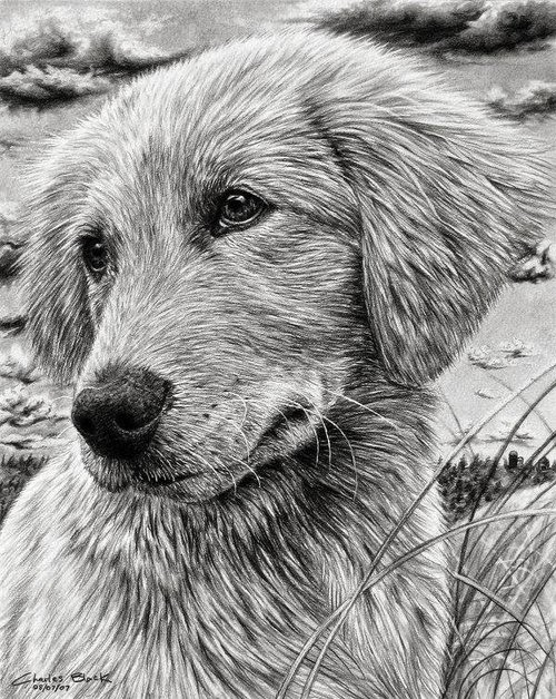 13-Charles-Black-Hyper-Realistic-Pencil-Drawings-of-Dogs-www-designstack-co