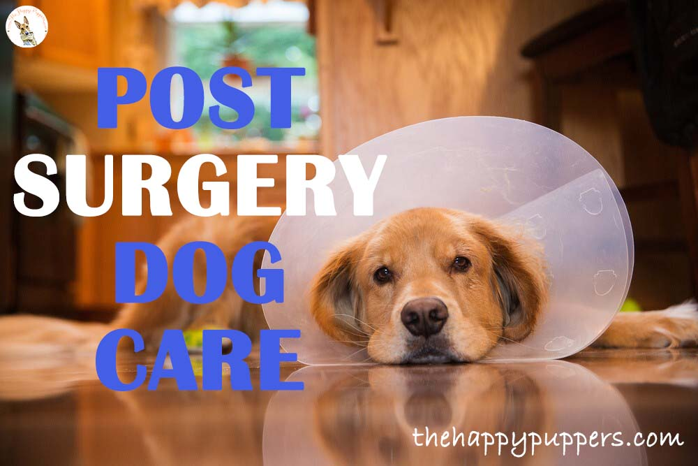 Post surgery dog care tips for easy recovery