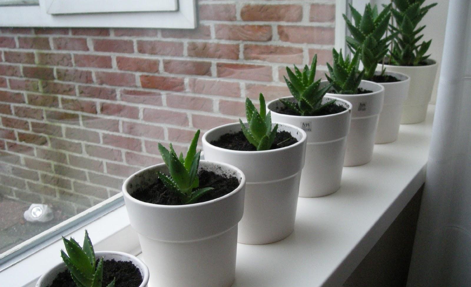 New Planten In De Vensterbank #PG56