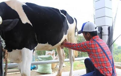 Dowes29 Com Harga Tiket Masuk Cimory Dairyland Prigen