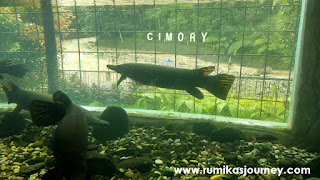 monster aquarium cimory riverside