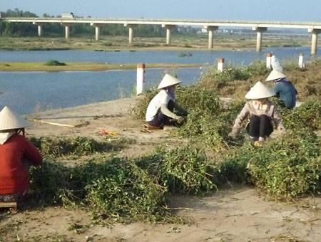 Những kiểu mua bán tận diệt của Trung Quốc tại Việt Nam ảnh 12
