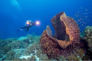स्पंज(Sponges) 200 से अधिक वर्ष, 11,000 वर्ष तक 10 longest-living Animals Facts | 10 सबसे लंबे समय तक जीवित रहने वाले जानवर