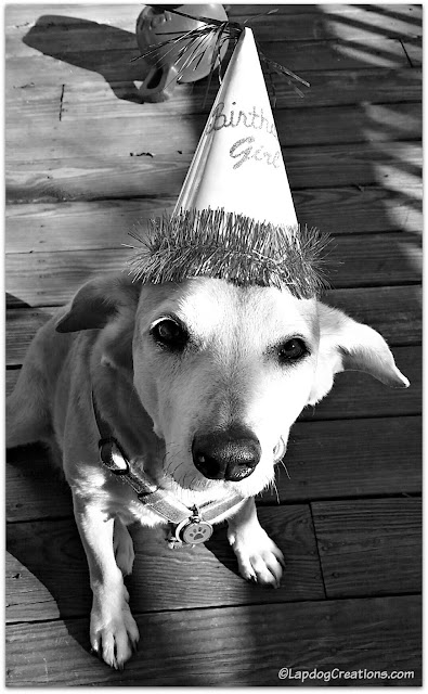 Hound dog with birthday hat
