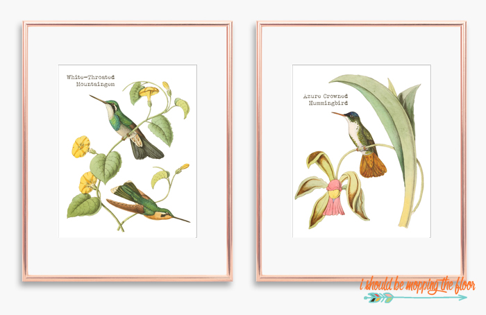 Hummingbird Printable