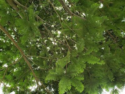 Folhas verdes de uma árvore
