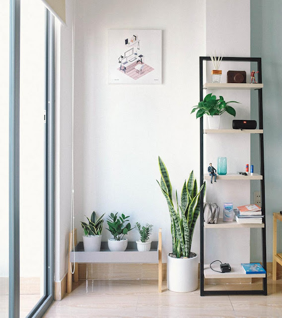 Bring nature into your home through plants