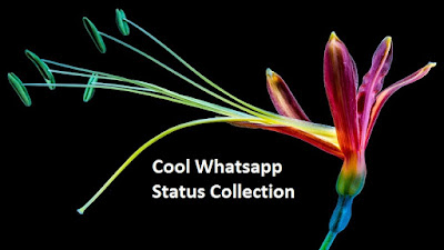 Cool Whatsapp Status