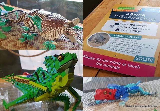 Knowsley Safari #Ultimatebricksafari insect tent chameleon lizard abner armadillo