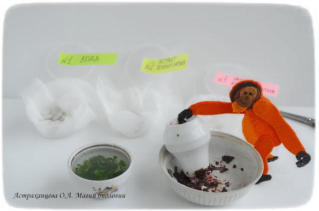 эксперимент-с-антоцианами-и-фасолью