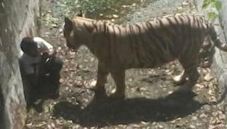 Συγκλονιστικό στιγμιότυπο: Τίγρης σκότωσε αγόρι στο ζωολογικό κήπο στο Νέο Δελχί...