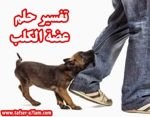 تفسير حلم عضة الكلب,عضة الكلب في المنام,تفسير حلم عضة الكلب,عض الكلب,رؤية الكلب في المنام