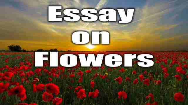 Image of a flowers garden used for english essay on flower