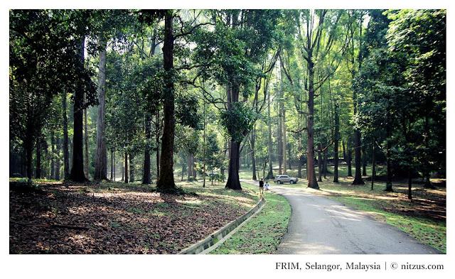 Selangor FRIM Skywalk Malaysia - Ramble and Wander