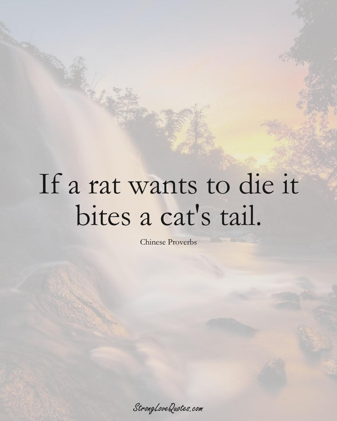 If a rat wants to die it bites a cat's tail. (Chinese Sayings);  #AsianSayings