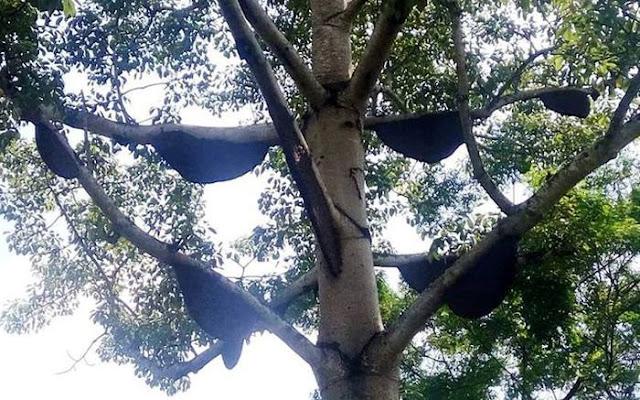 40 tổ ong rừng trong vườn nhà