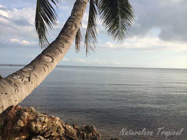 Fotografía tomada en la costa sur de Mayabeque, la Habana, Cuba