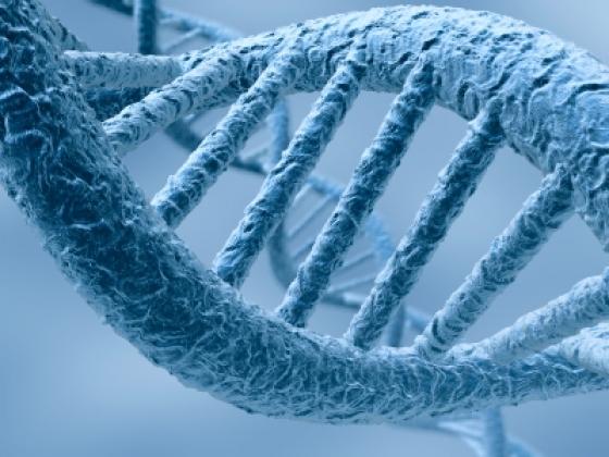 ADN, el disco rígido del futuro
