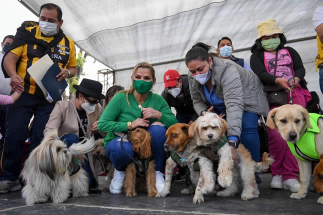 Presidenta Áñez pone en vigencia plena la Ley 700 de protección a los animales mediante decreto reglamentario