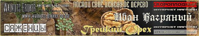 Купить саженцы ореха Иван Багряный Украина, 0957351986, 0985674877, Walnuts Broker