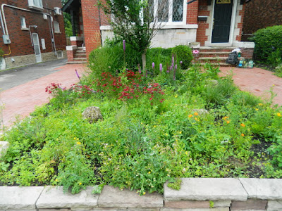 Avenue Road Front Garden Cleanup Before by Paul Jung Toronto Gardening Services