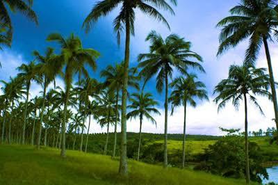 Bebas Kasus Corona, Negara Ini Klaim Rahasianya Cuma Pohon Kelapa